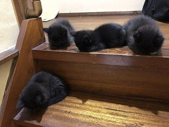 【画像】まっくろくろすけ下りといで~! フワフワな真っ黒子猫に「可愛い」の嵐www