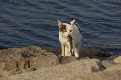 【動画】お魚くわえたドラ猫 漁師にぶん殴られるwwwwwwwwwww