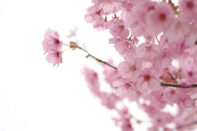 キモオタ会社員の俺についに春がきたったwww