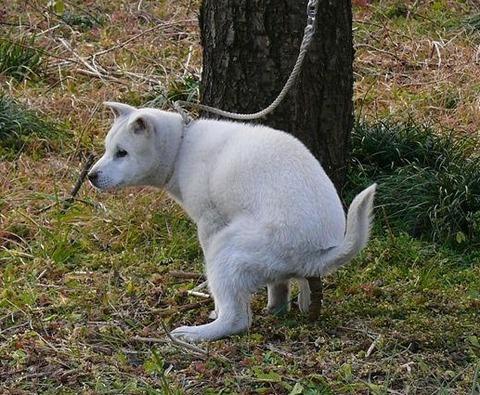 犬のウンコ
