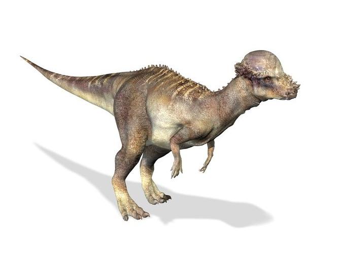 パキケファロサウルス_l
