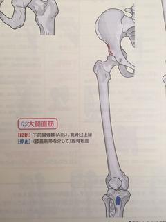 A57大腿直筋