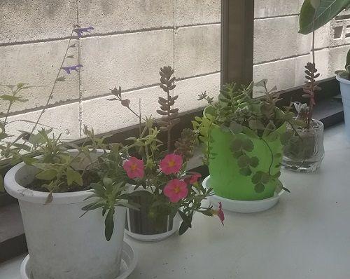 新しい鉢植えをいただきました!