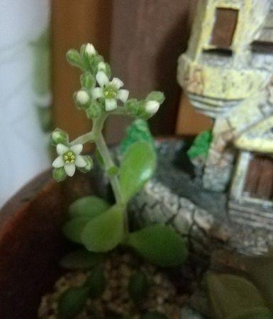 ついに開花!