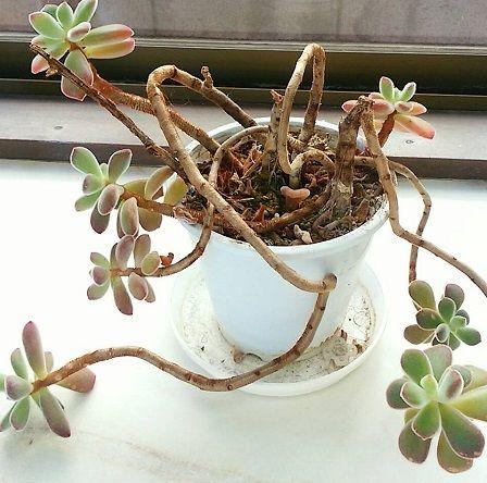 観葉植物をお色直し