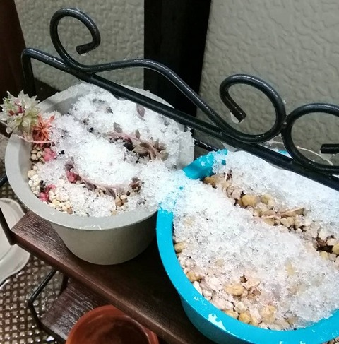 季節外れの雪が降りましたね!