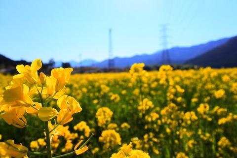 2日目 菜の花畑散策_170603_0019