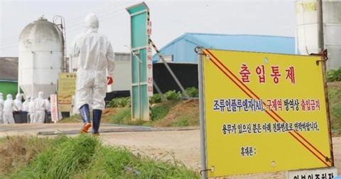 韓国の鳥インフルエンザ