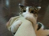 今日は猫の日にゃ!