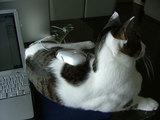 一家に一つ。猫マウスパッド