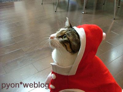 ピート猫サンタ