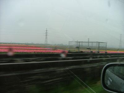 新潟は雨です