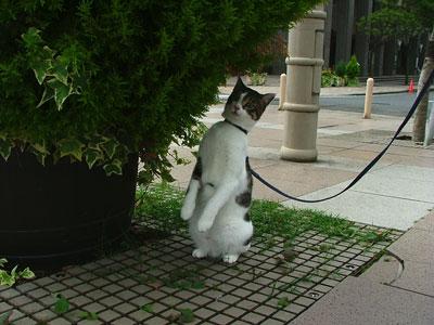 久々に近所を歩いていたら