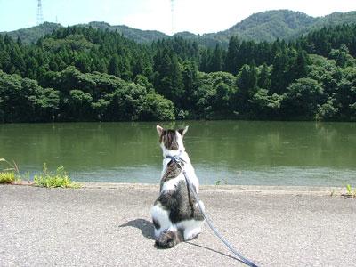 猫と阿賀野川