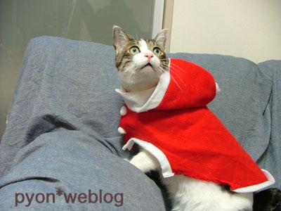サンタ服を着てキョトンとする猫ピート