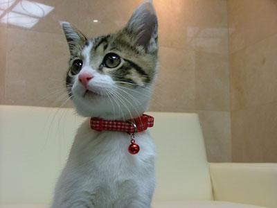 子猫のピート
