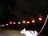 夜の神峰公園のあんどん