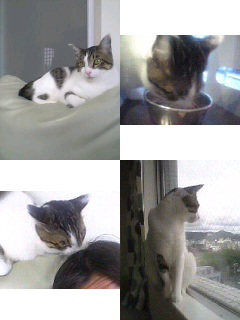 2006年06月03日のピート