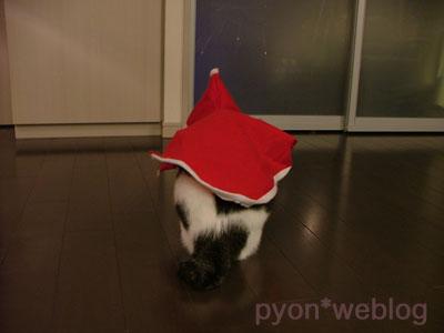 猫サンタ後ろ姿