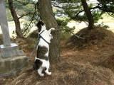 木登りしたいにゃ