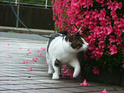 こんなに綺麗なお花が