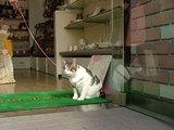 お店の入り口で招き猫