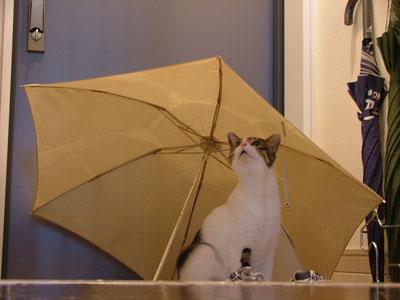 雨やどり?