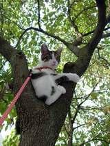 木登りピートさん