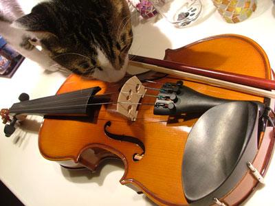 バイオリンにゃ