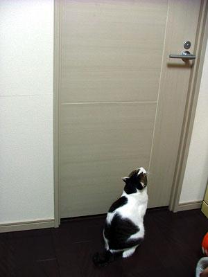 このドア開けてにゃっ!