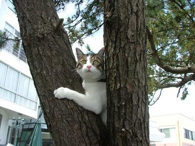 木登りにゃっ!!