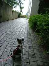 ピートのお散歩道
