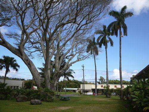 HAWAII-1 202_1