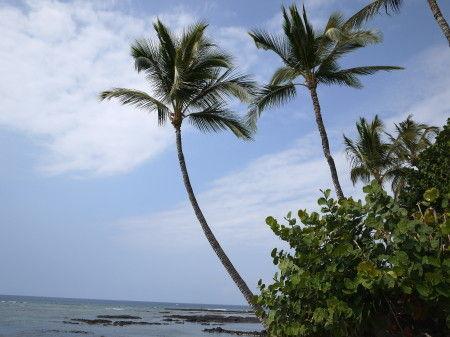 HAWAII-1 020_1
