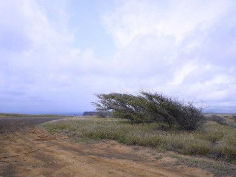 HAWAII-2 103_1