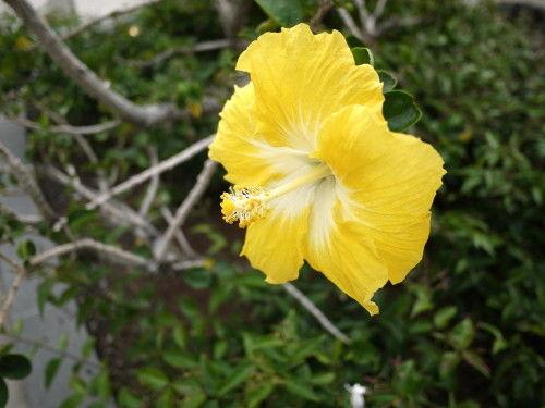 HAWAII-1 066_1