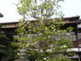 DSCN1454