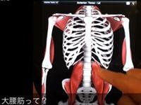腰痛改善の為のセルフ整体【大腰筋】