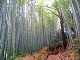 18佐倉武家屋敷付近の竹林