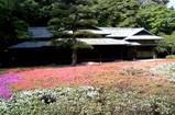 32諏訪の茶屋