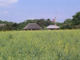 33国営ひたち海浜公園01