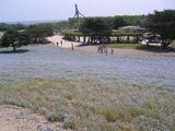 35国営ひたち海浜公園03