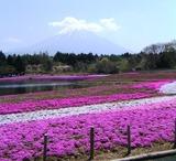 01富士芝桜まつり会場より