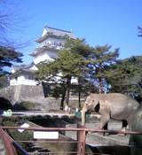 ゾウの居るお城