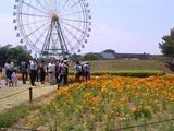36国営ひたち海浜公園04