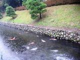 16堀と鯉