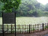 13姥が池