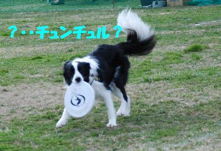 コピー (2) ~ DSC_0157