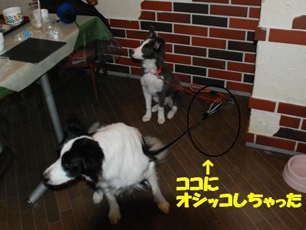 コピー ~ DSC_0584