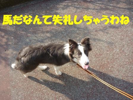 コピー ~ P1030814